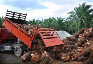 Palm unloading