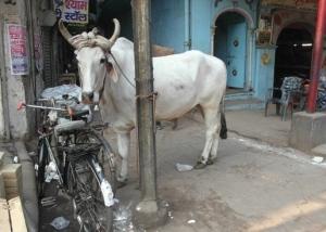 Bullock Delhi edited